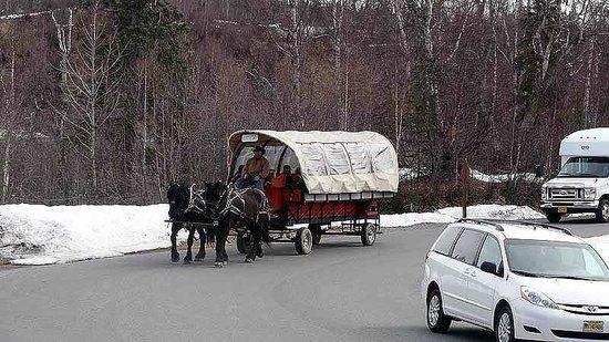Mt. McKinley Princess Wilderness Lodge: Horse carriage