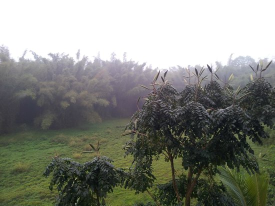 Konark Homestay: View to Perijar wildlife park
