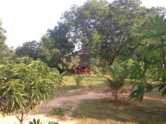 JC Guesthouse : Lovely green harden with many flowers and fruit trees!!!