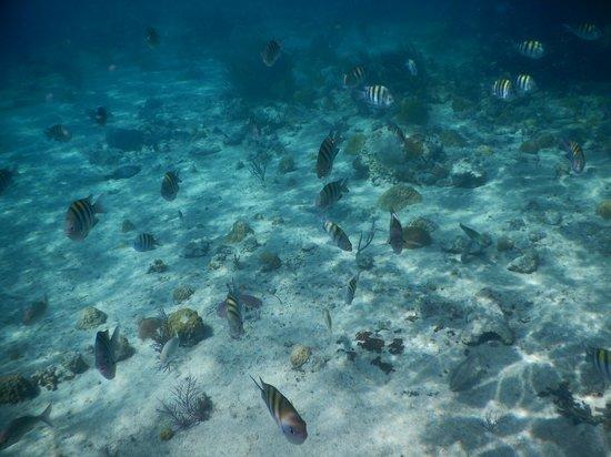 Exuma Cays Land and Sea Park: snorkeling thunderball grotto