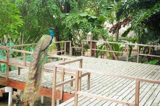 Koh Munnork Private Island Resort by Epikurean Lifestyle: View from Bungalows
