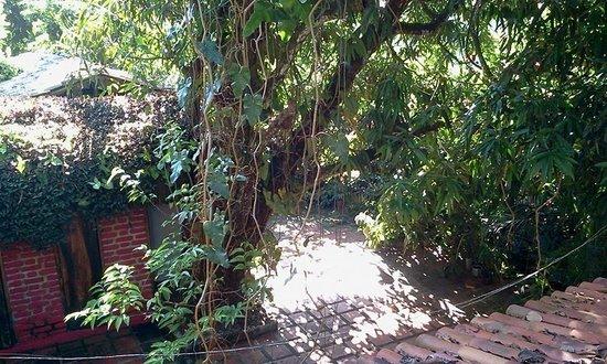 Pousada Uma Janela Para O Sol: Tussen de bomen