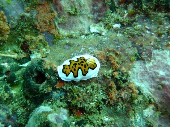 Rockside Cabanas Hotel: Nudibranch