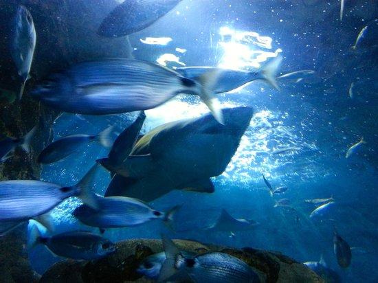 Aquarium Donostia-San Sebastian: 6