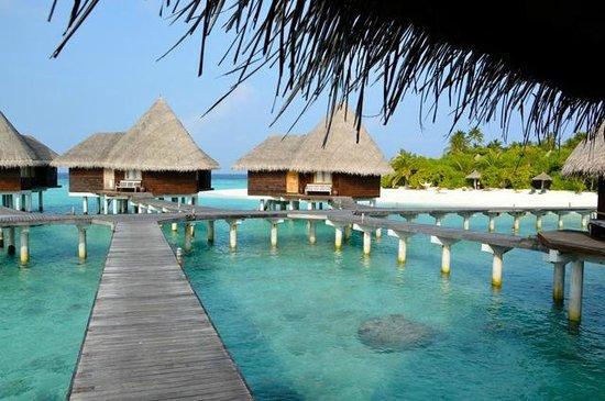 Coco Palm Dhuni Kolhu : lagoon villas