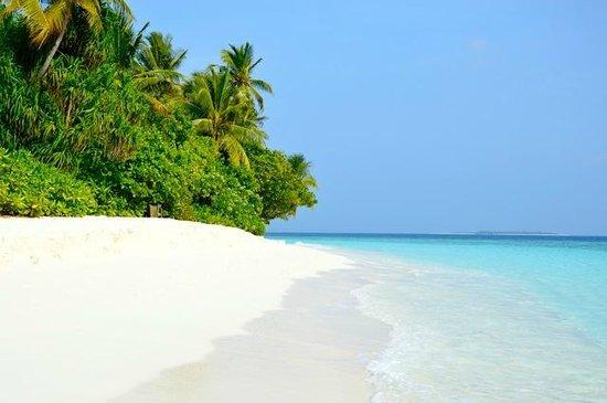 Coco Palm Dhuni Kolhu : plage