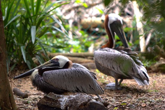 Xaman Ha Aviary : bird
