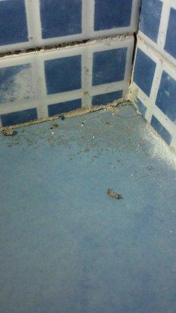 Atenea Calabria Apartaments: Banheiro, sob a pia