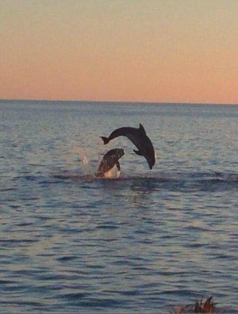 Siesta Key Watersports: amazing time!