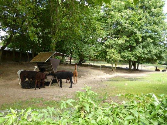 Kölner Zoo: Вольеры в кельнском зоопарке