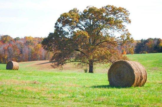 Daveste' Vineyards: Tree and field at Davesté Vineyards