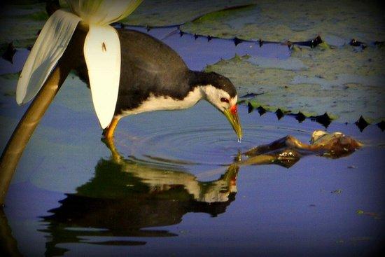 Jayanti Sarovar: Bird at the sarovar