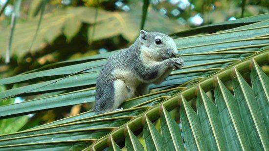 Royal Orchid Sheraton Hotel & Towers: Ecureuil dans les jardins