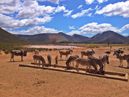 Skaris Touring: Safari at Anquila