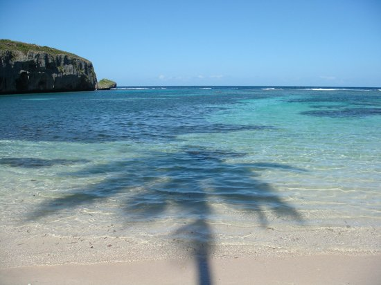 Las Galeras, República Dominicana: Coconut tree shadow over the water...