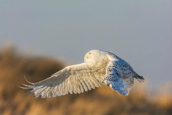 Jones Beach State Park: Flying
