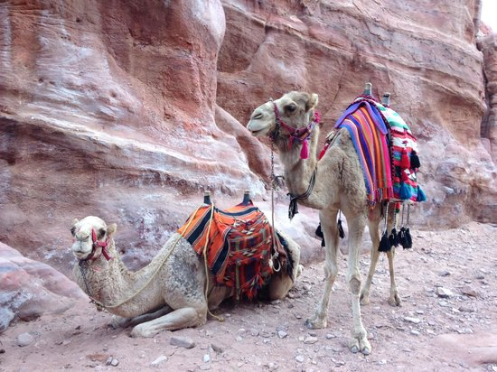 Green Olive Tours: Petra