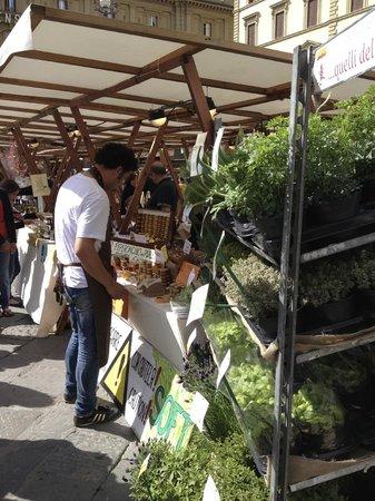 Piazza della Repubblica: Assorted Plants