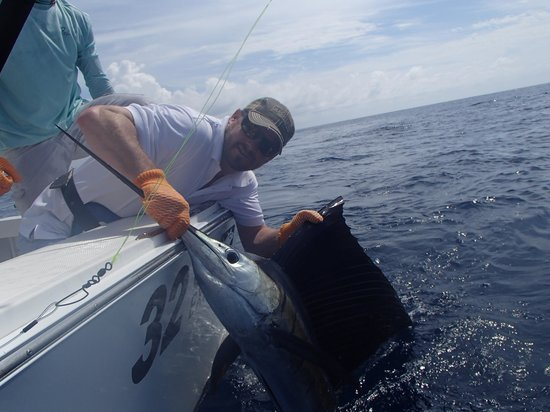 Costa Rica Dreams Sportfishing: Husband's sailfish