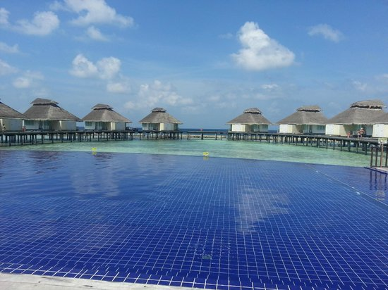 Ellaidhoo Maldives by Cinnamon : Infinity pool and villas