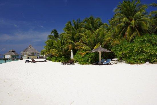 Ellaidhoo Maldives by Cinnamon : Beach Area