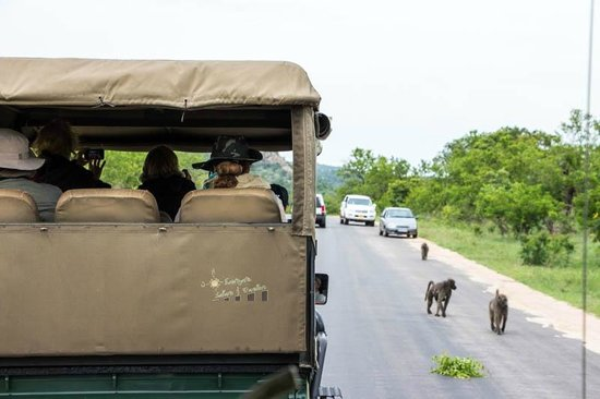Protea Hotel by Marriott Kruger Gate: Game drive vehicle & baboons in nearby Kruger Park