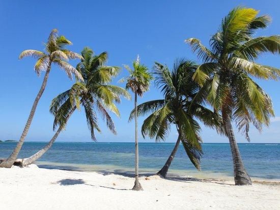 Blackbird Caye Resort : view from my room