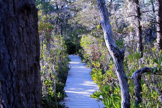 Jughandle State Reserve: Pygmy forest walk