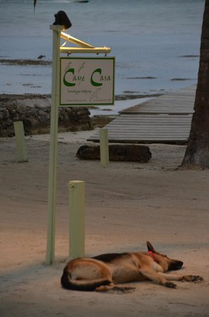 "Caye Casa : ""Reef"", the German Shepherd is a great guard dog and companion to visitors!"