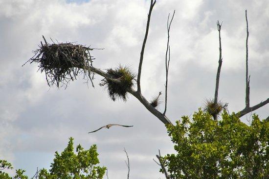 Smallwood Store Boat Tour: Nest