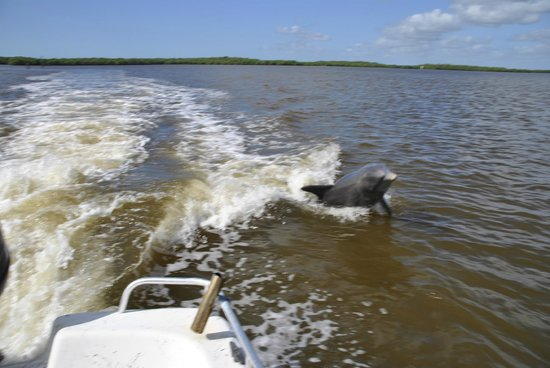 Smallwood Store Boat Tour: Dolphin jumping in the wake of the boat