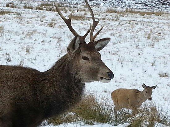 Timberbush Tours Glasgow - Day Tours: Wildlife of Glencoe .