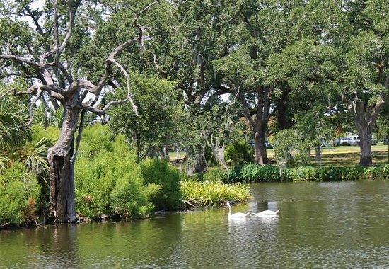 Nice City Park Botanical Gardens #1: New-orleans-city-park.jpg