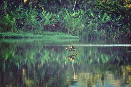 Finca Barlovento Cabaña & Maloka: flora e fauna nel sottostante fiume