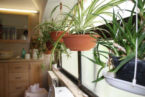 Cactus Tzimmer: bathroom