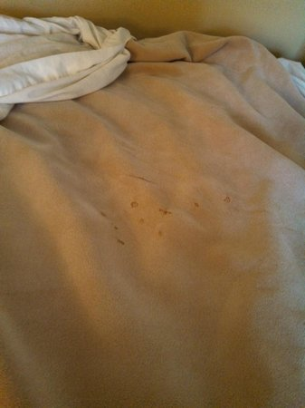 Howard Johnson Inn & Suites Tacoma Near McChord AFB: Holes/stains on blankets