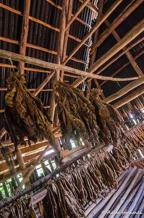La Autentica: Tabakproduktionsstätte bei Vinales