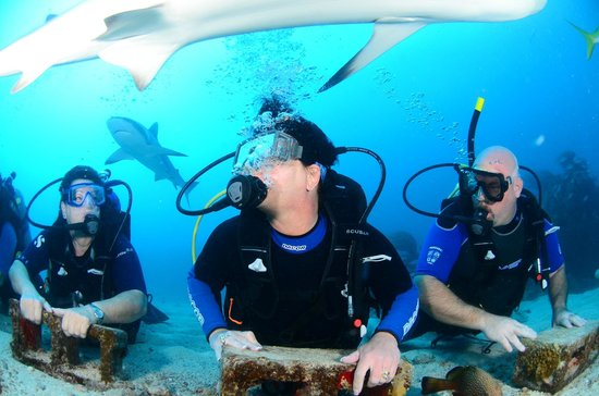 Ocean Explorers Dive Center: Shark Dive