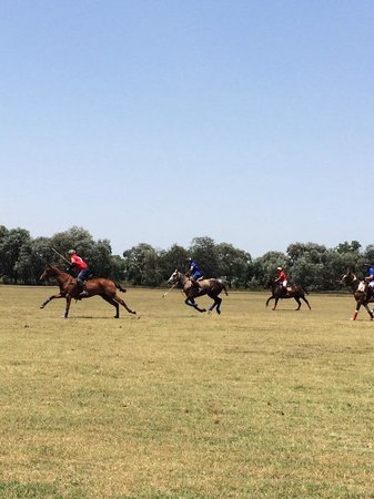 Argentina Polo Day: .