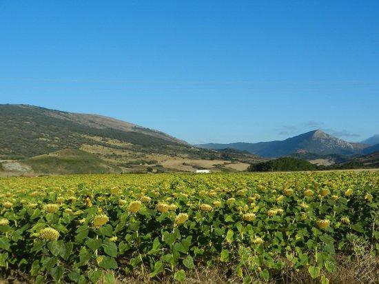 Casa de la Cadena: Entorno rural