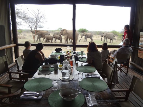 nThambo Tree Camp : Interrupted during breakfast.