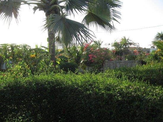 La Tortue Bleue: vue du jardin depuis les chambres