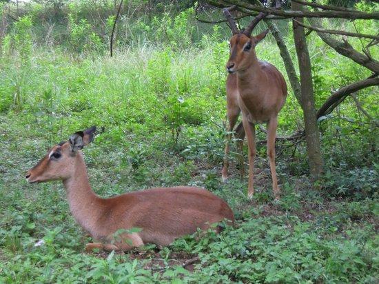 Queen Elizabeth Park: the lovely buck