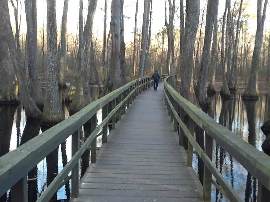Natchez Trace Parkway : The Cypress Swamp in winter