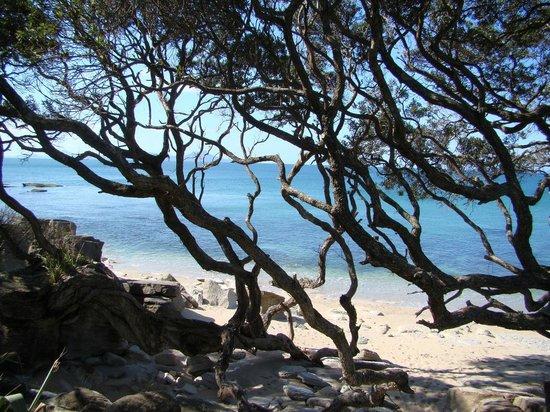 Country Homestead at Black Sheep Farm: Ding Bay (at Langs Beach)