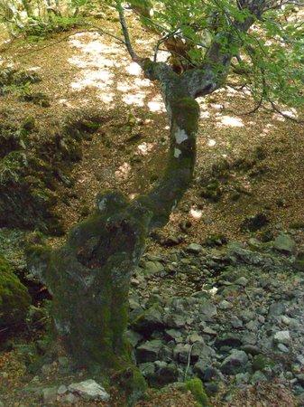 Bosque del Faedo: Vista del bosque.