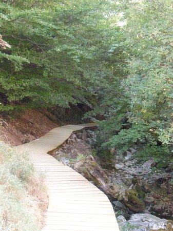 Bosque del Faedo: Camino que recorre el bosque.