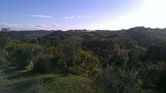 Tasty Tuscany: View from yard