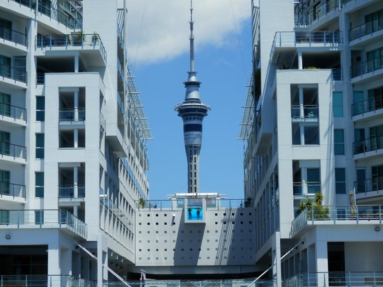 Fullers Auckland Harbour Cruise: Hilton swimming pool with Sky Tower shot