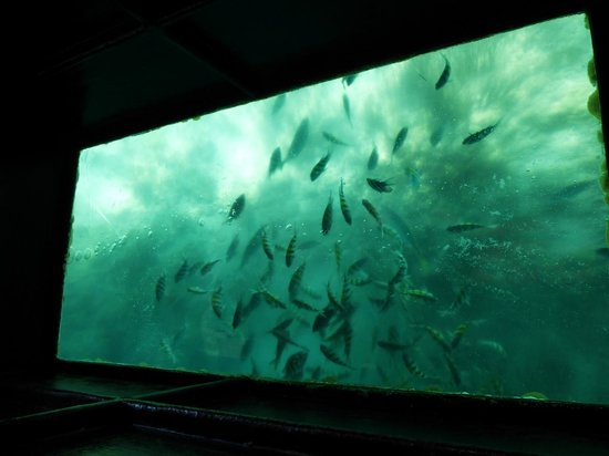 Cayo Coco, Kuba: One of the 2 glass windows on the boat
